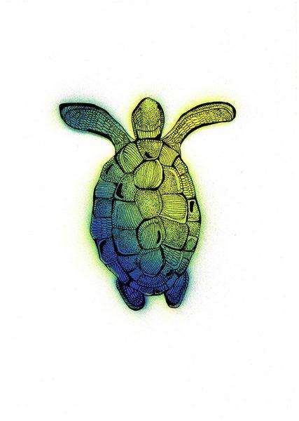 Tortoise Illustration