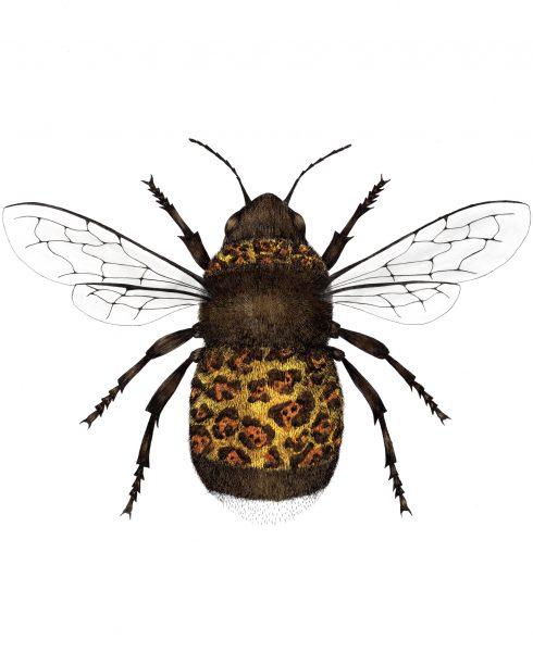 Metallic Jaguar Bee