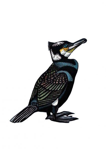 Seabirds of Eastbourne: Cormorant