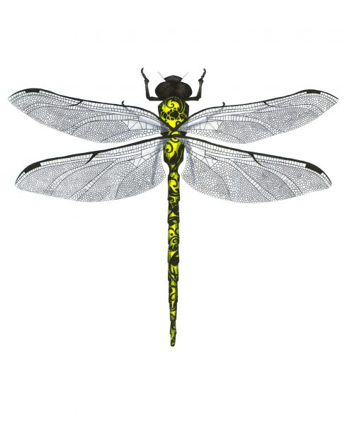 Neon Yellow Dragonfly