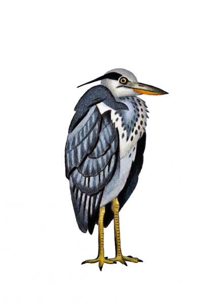 Seabirds of Eastbourne: Grey Heron
