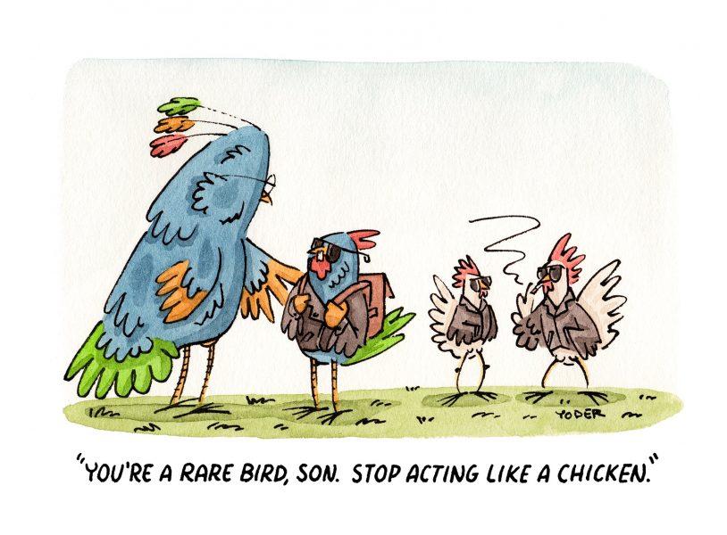 Rare Bird Insta