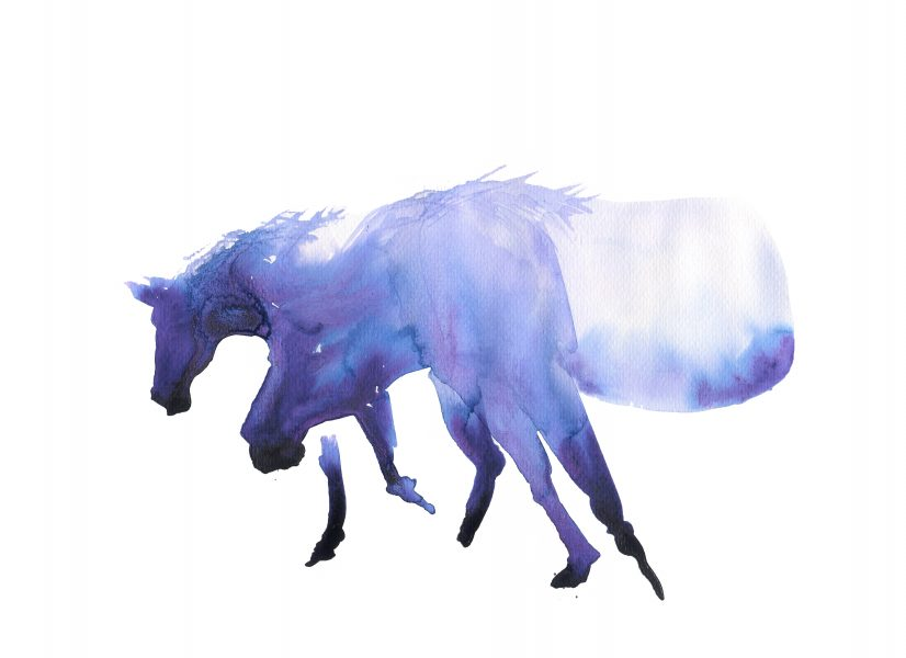 Wild horses_AnnKiernan