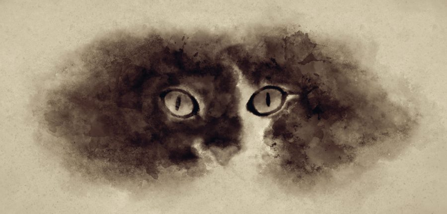 The cat's eyes