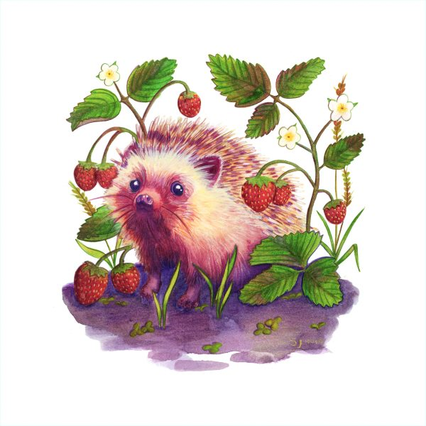 Hedgehog In A Strawberry Patch