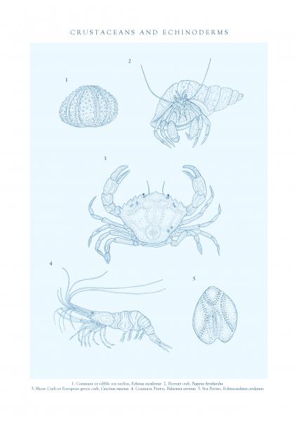 Marine Crustaceans