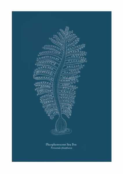 Phosphorescent Sea Pen plate