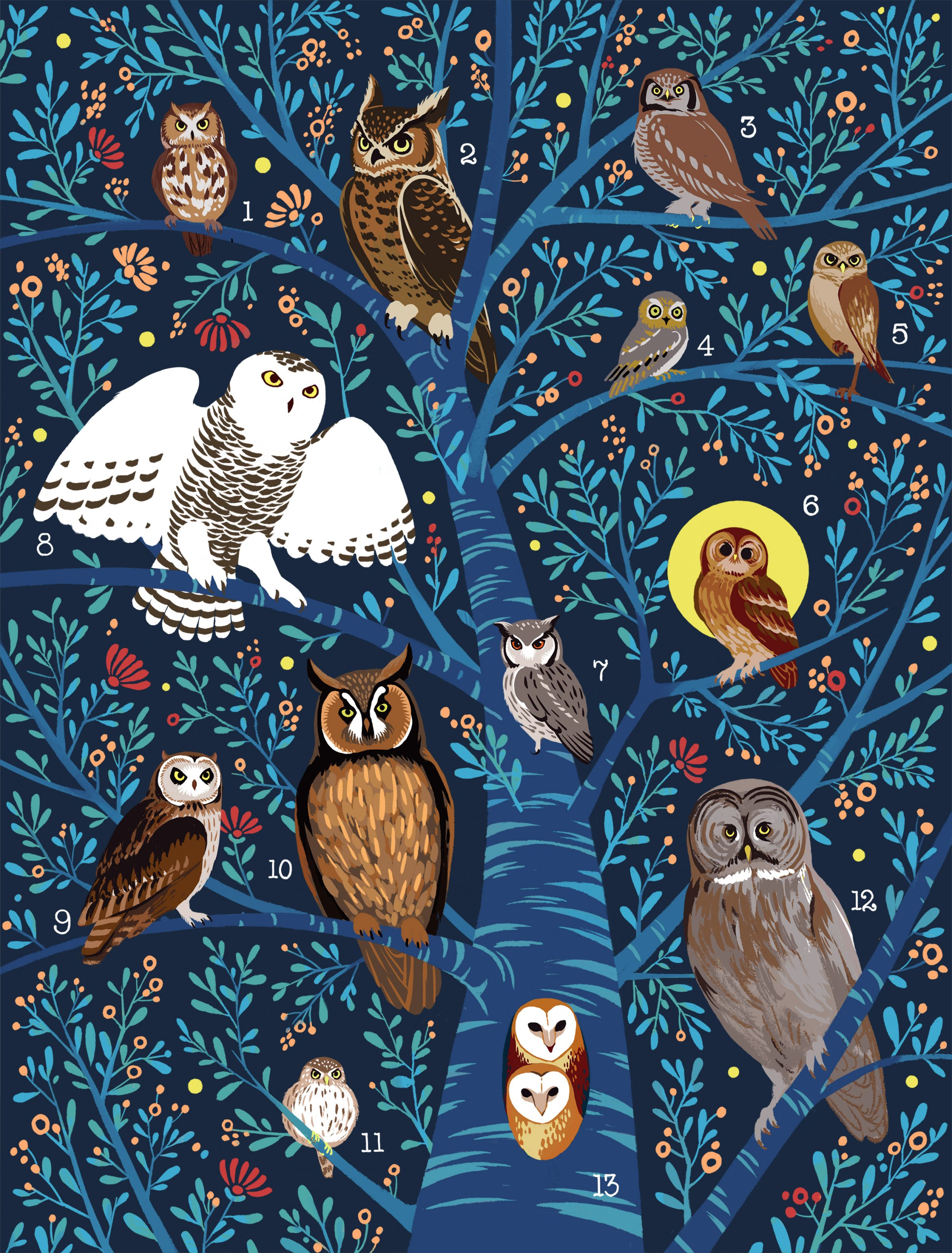 Xiao Lei : Owls of the World