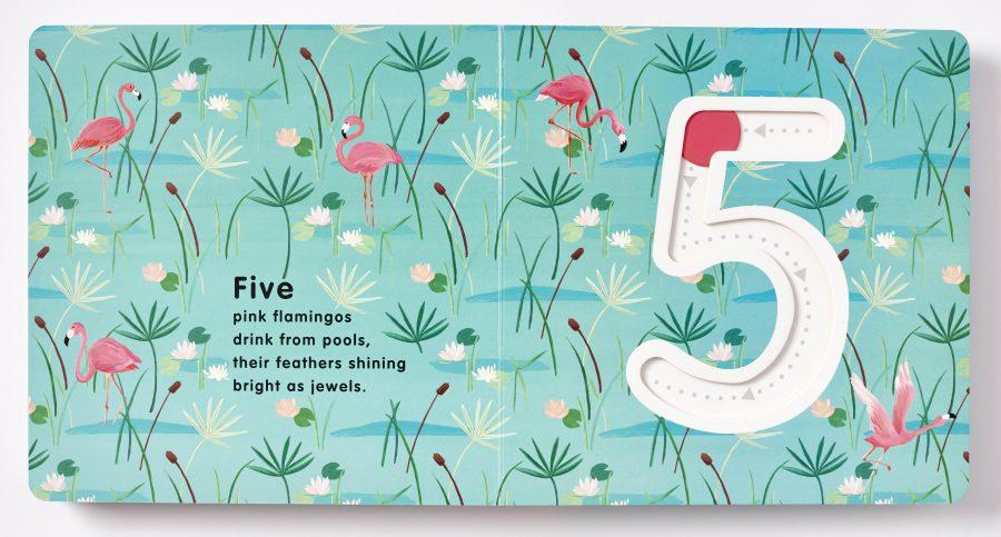 5 Wild Numbers, Children's Board Book