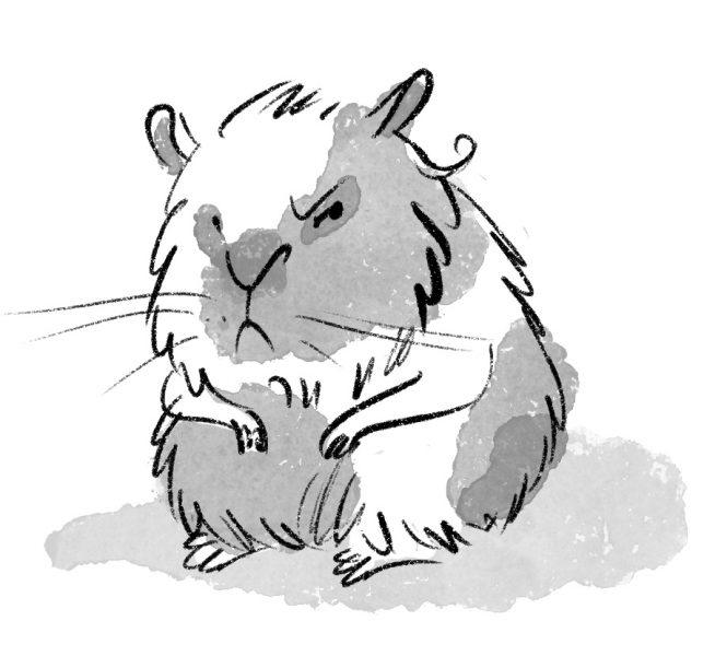 angry hamster