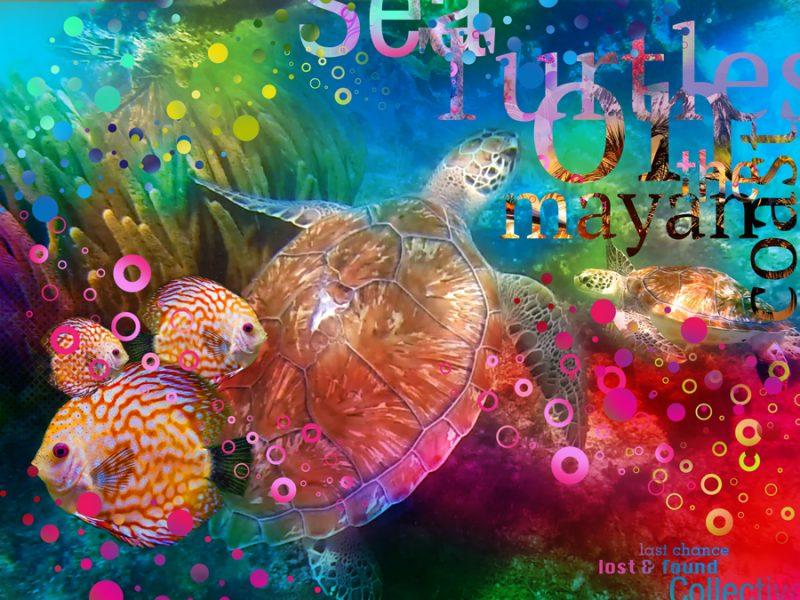 Sea Turtle of Tulum