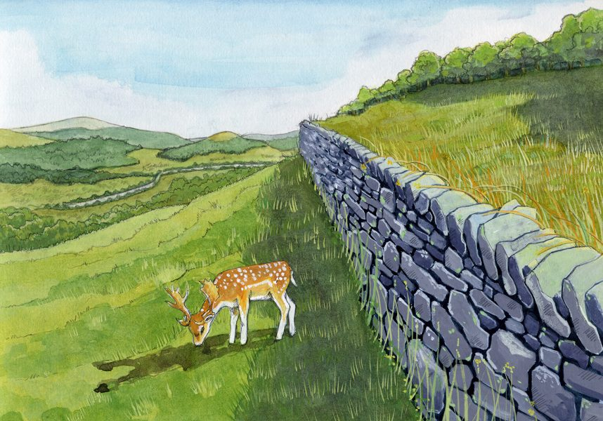 Archaeological reconstruction illustration of Radholme deer park boundary in about 1500. #archaeology. www.jennieanderson.co.uk