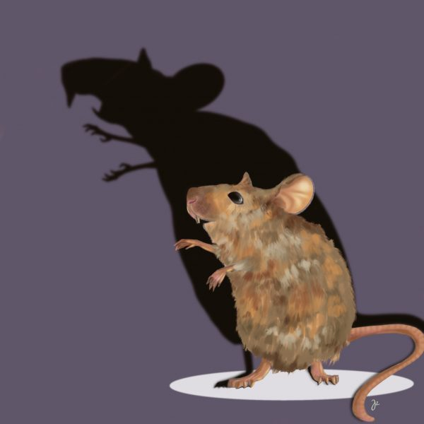 Scary mouse