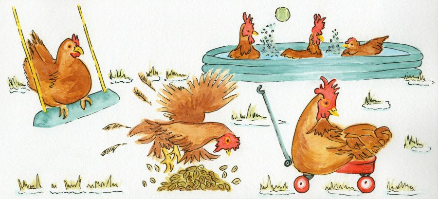 Activities for bored chickens in winter