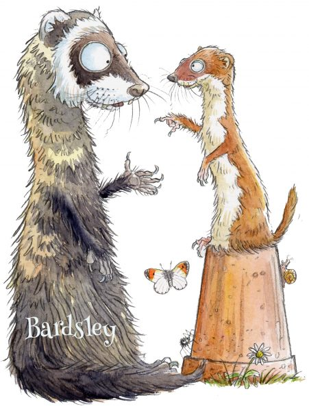 The ferret and the weasel