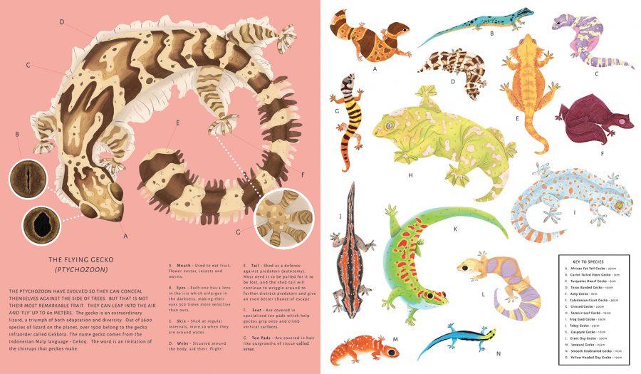 Gecko's species sheet