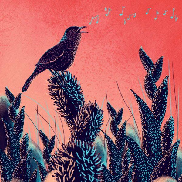 Sing bird, sing.