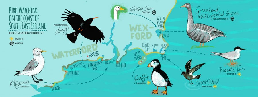 KNW_Seabirds-SE-Ireland