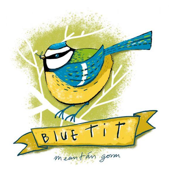 Garden Bird - Blue Tit