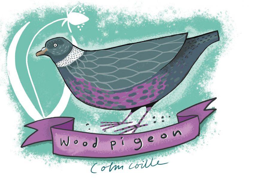 Garden bird - pigeon