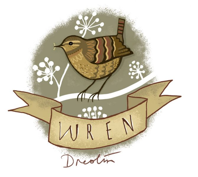 Garden bird - wren