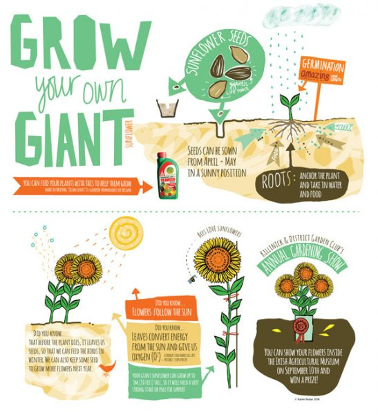 Grow a Sunflower poster