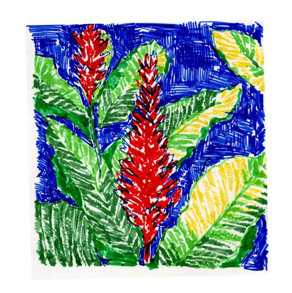 kezia_frederick_illustration_tropical_2