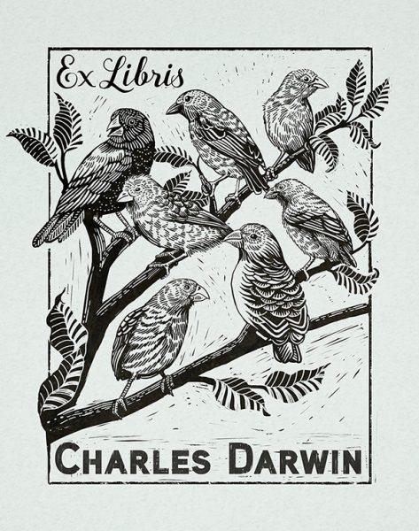 Darwin_web
