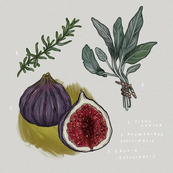 Figs & Herbs