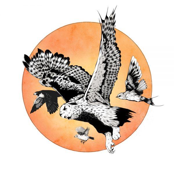 Rare British Birds