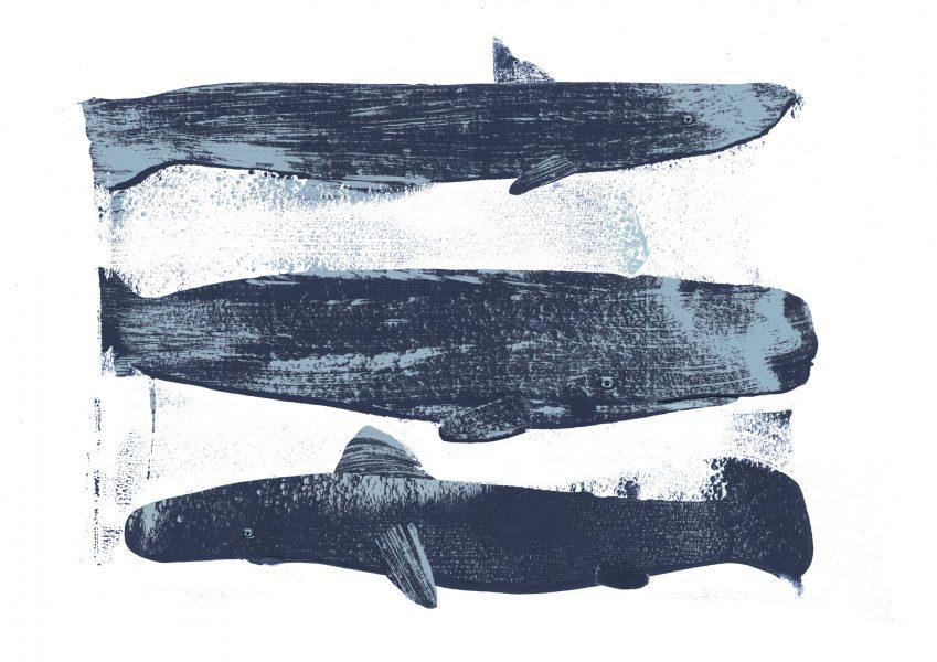 Shark, Whale, Shark