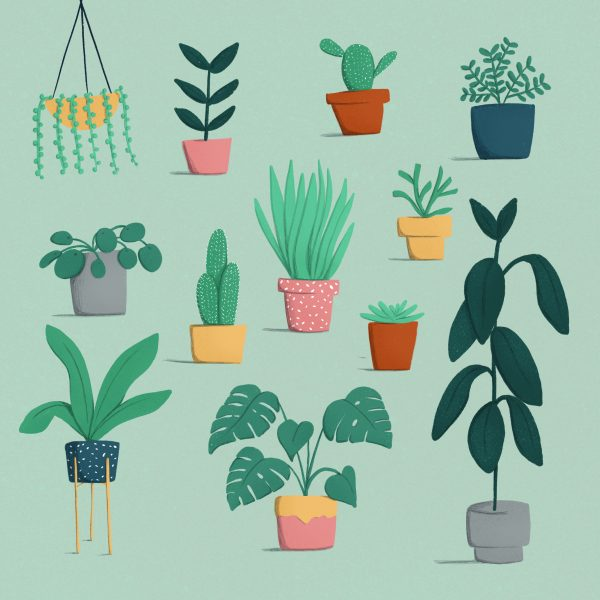 Houseplants 2