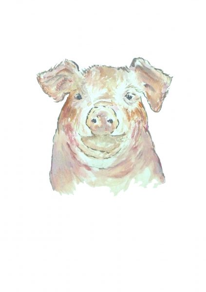 Milly England Pig 2