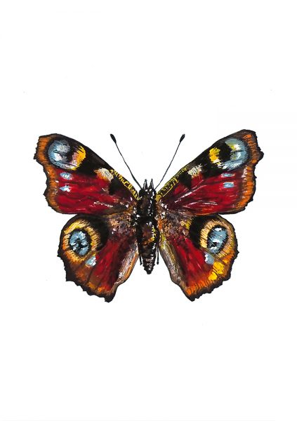 Milly England Red admiral
