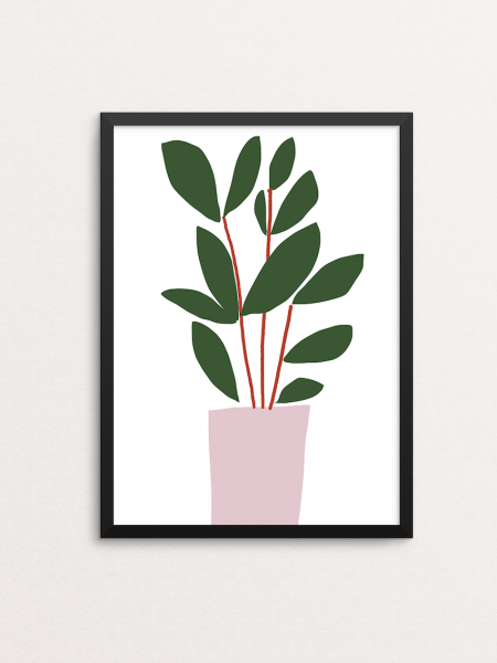 Ficus (Office Plants)