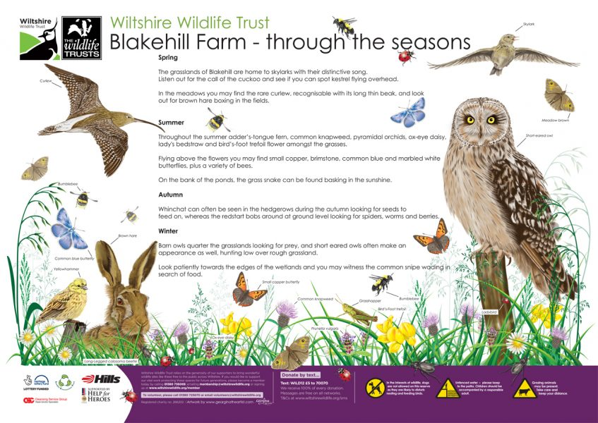 Wilshire-Wildlife-Trust-Wildlife-Illustration-on-Blakehill-Fram