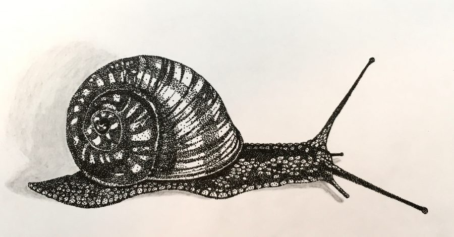 Stippled Snail