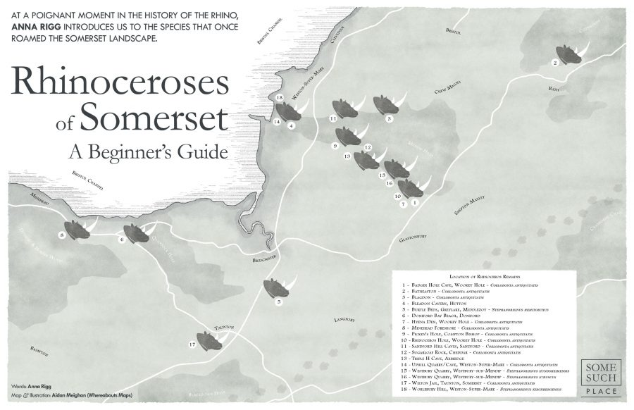 Rhinoceroses of Somerset
