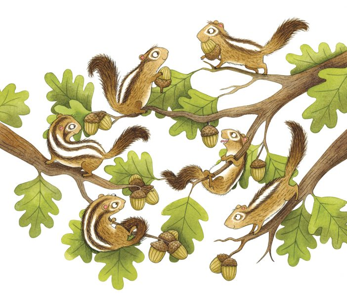 Chipmunk illustration