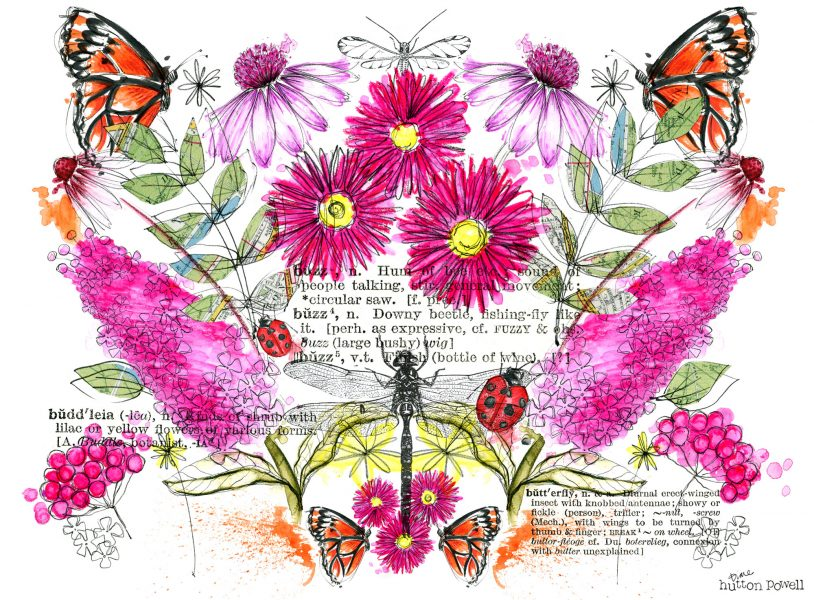 Butterflies and Bugs