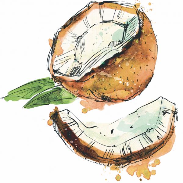 Watercolor Coconut