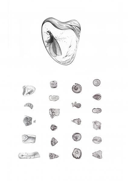 Fossil drawings