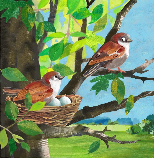 Sparrows and their Nest