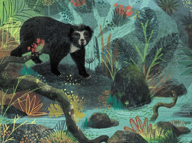 Andean Bear, Spirit Animal
