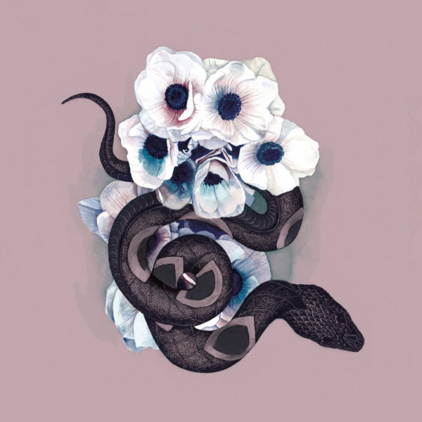 Snake and anemones