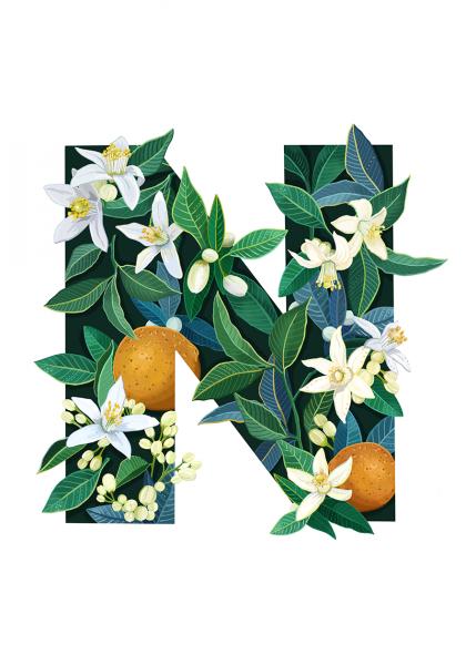 Letter N Illustration