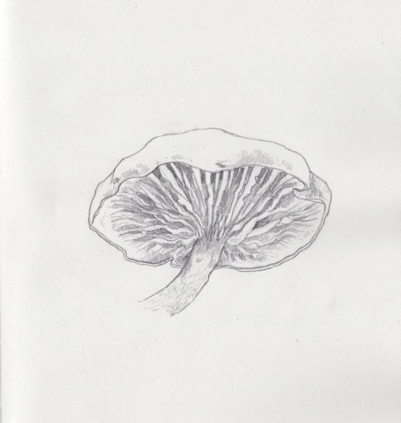 Sketch of mushroom