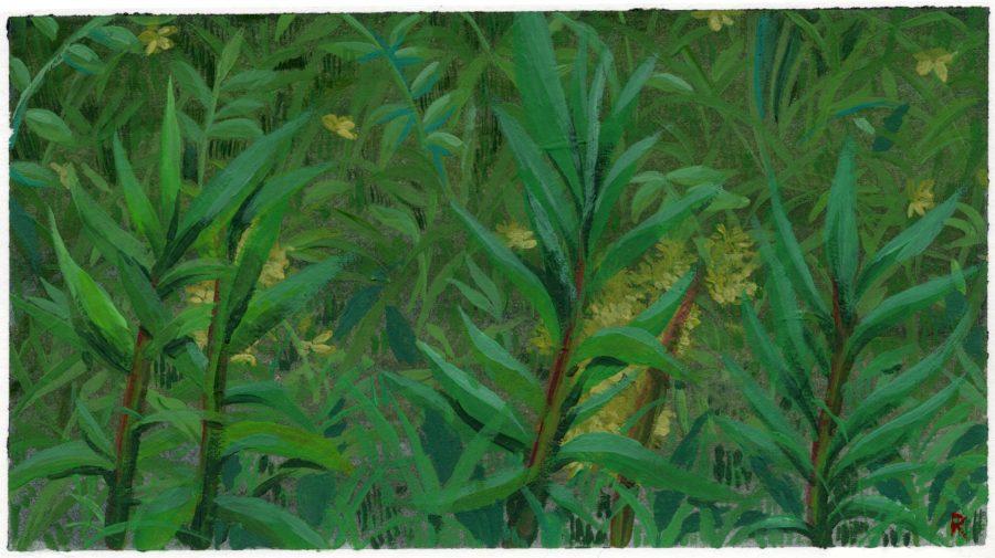 Plants & Weeds