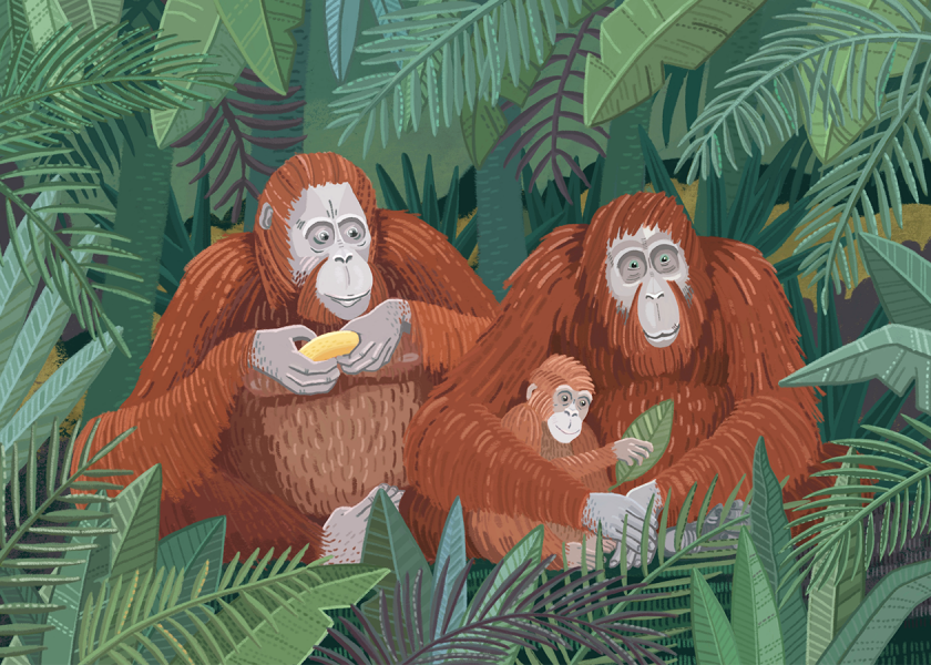 Orangutans family