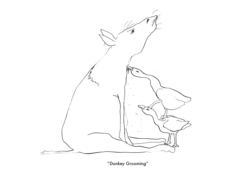 Grooming, GOOSE picture book